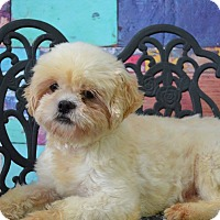 Adopt A Pet :: Pixie Davis - Urbana, OH