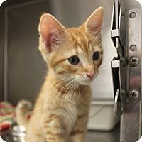 Adopt A Pet :: Cinnamon - Naperville, IL