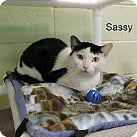 Adopt A Pet :: Sassy - Slidell, LA