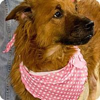 Adopt A Pet :: RAVEN - Indiana, PA