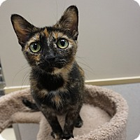 Adopt A Pet :: Autumn - Naperville, IL