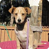 Adopt A Pet :: Rover - Springfield, VA