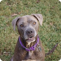 Adopt A Pet :: CC - Arlington, TN