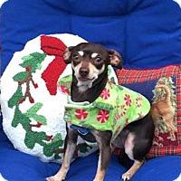 Adopt A Pet :: Jessie - North Richland Hills, TX