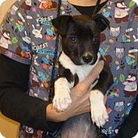 Adopt A Pet :: 329576 LF - Wildomar, CA