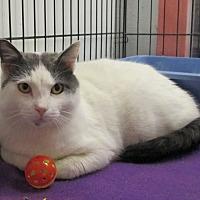Adopt A Pet :: FuManChu - Reeds Spring, MO