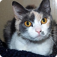 Adopt A Pet :: Callie $20 - Lincolnton, NC