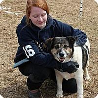 Adopt A Pet :: Squeak - Midlothian, VA