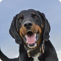 Adopt A Pet :: Elvis - Cheyenne, WY