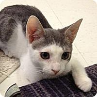 Adopt A Pet :: Deano - Island Park, NY