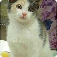 Adopt A Pet :: Peggy - Modesto, CA