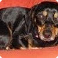 Adopt A Pet :: Juliet - Justin, TX