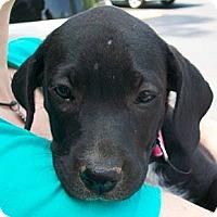 Adopt A Pet :: Petunia - Richmond, VA