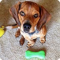Adopt A Pet :: Fergus - Russellville, KY