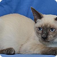 Adopt A Pet :: Samantha - Davis, CA