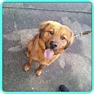Adopt A Pet :: WOODY