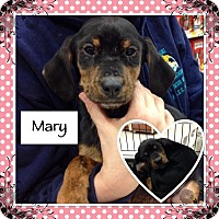 Adopt A Pet :: mary in CT - East Hartford, CT