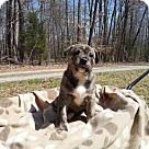 Adopt A Pet :: Emmylou Harris