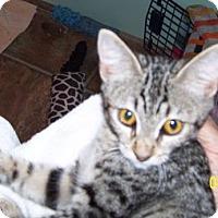 Adopt A Pet :: Tempi - Paradise, CA