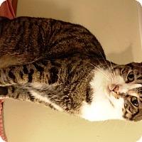 Adopt A Pet :: Seymor - Nolensville, TN