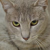 Adopt A Pet :: Krista150267 - Atlanta, GA