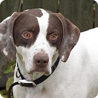 Adopt A Pet :: Mannheim - ADOPTED - Livonia, MI
