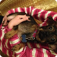 Adopt A Pet :: Zena - North Richland Hills, TX