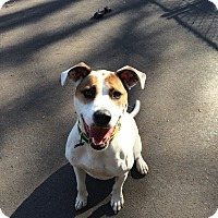 Adopt A Pet :: Jase in CT - Manchester, CT