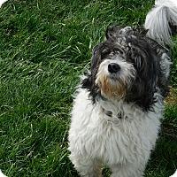 Adopt A Pet :: Tucker - Howell, MI