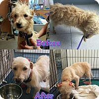 Adopt A Pet :: CASSIOPEIA - Phoenix, AZ