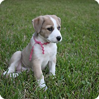 Adopt A Pet :: Hanna - Friendswood, TX