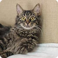 Adopt A Pet :: Sage - Midland, MI