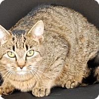 Adopt A Pet :: Lynx - Newland, NC