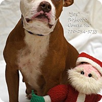 Adopt A Pet :: Joy - Newnan City, GA