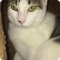 Adopt A Pet :: Artie - Chula Vista, CA