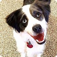 Adopt A Pet :: Cooper - Evansville, IN