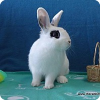 Other/Unknown for adoption in Scotts Valley, California - Olaf