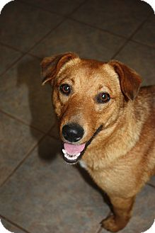 German Shepherd Dog Mix Dog for adoption in Stilwell, Oklahoma - Fudge