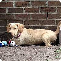 Adopt A Pet :: Heather - Murrells Inlet, SC