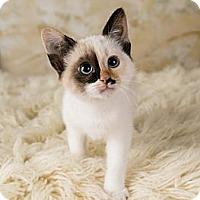 Adopt A Pet :: Opal - Eagan, MN