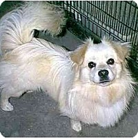 Adopt A Pet :: FLASH - dewey, AZ