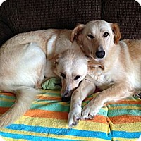 Adopt A Pet :: Kate and Allie - Cheshire, CT