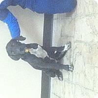 Adopt A Pet :: Luke - Oviedo, FL