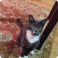 Adopt A Pet :: Selma - Brooklyn, NY