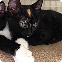 Adopt A Pet :: Dot - Redondo Beach, CA