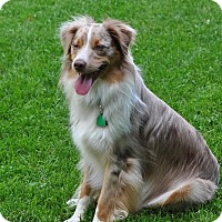 Adopt A Pet :: Nixon - Washington, IL