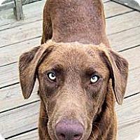 Adopt A Pet :: Tex - Waller, TX