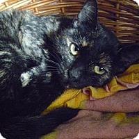 Adopt A Pet :: Peanut Sue - Hamburg, NY