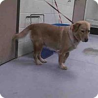 Adopt A Pet :: A262985 - Conroe, TX