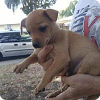 Adopt A Pet :: Gloria - Lodi, CA